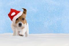 Pies, szczeniak, Jack Russel Terrier z Santa kapeluszowym doskakiwaniem w sn Zdjęcia Royalty Free