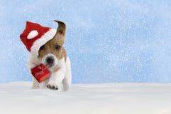 Pies, szczeniak, Jack Russel Terrier z Santa kapeluszowym doskakiwaniem w sn Zdjęcie Stock