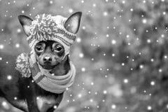 Pies, szczeniak w kapeluszu i szalik, śnieg spadamy Nowy Rok, Chri Zdjęcia Stock