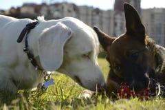 Pies sztuka z each inny Fotografia Royalty Free