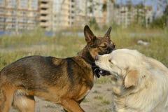 Pies sztuka z each inny tła psi szary labradora szczeniaka tyły aporteru widok obraz stock