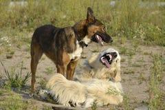 Pies sztuka z each inny tła psi szary labradora szczeniaka tyły aporteru widok zdjęcia stock