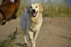 Pies sztuka z each inny tła psi szary labradora szczeniaka tyły aporteru widok zdjęcie royalty free