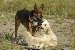 Pies sztuka z each inny tła psi szary labradora szczeniaka tyły aporteru widok fotografia royalty free