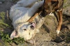 Pies sztuka z each inny tła psi szary labradora szczeniaka tyły aporteru widok Corgi pembrok zdjęcia stock