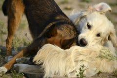 Pies sztuka z each inny tła psi szary labradora szczeniaka tyły aporteru widok Corgi pembrok obrazy royalty free