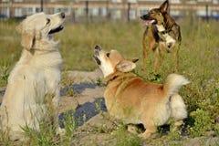 Pies sztuka z each inny tła psi szary labradora szczeniaka tyły aporteru widok Corgi pembroke obraz stock
