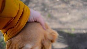 Pies szturchał jego nos w kamera obiektyw, mężczyzna Podsyca psa, ciekawe psie sztuki zdjęcie wideo