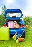 Pies, torby, zabawki, samochodowy przygotowywający dla wycieczki Zdjęcia Royalty Free