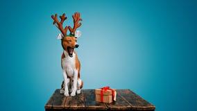Pies ubierał up jako Bożenarodzeniowy rogacz z teraźniejszością Obraz Stock
