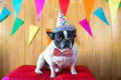 Pies ubierający dla przyjęcia fotografia stock