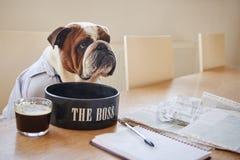 Pies Ubierający Jako biznesmeni Je Od pucharu Przylepiającego etykietkę szef zdjęcia royalty free