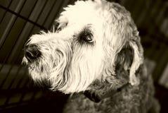pies w żałobie Zdjęcia Stock