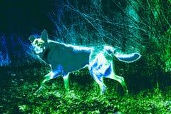 Pies w drewnie Zdjęcie Royalty Free