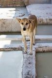 Pies w garbarni Medina Maroko Obrazy Royalty Free