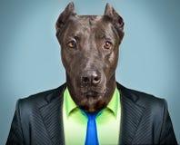 Pies w garniturze zdjęcie stock