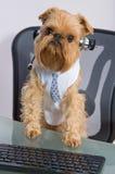 Pies w hełmofonach z mikrofonem Obraz Royalty Free