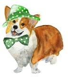 Pies w kapeluszu Zdjęcie Royalty Free