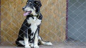 Pies w klatce przy zwierzęcym schronieniem zbiory