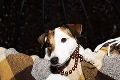 Pies w koc obraz royalty free