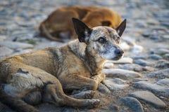 Pies w kolonialnym okręgu Trinidad, Kuba zdjęcia royalty free
