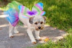 Pies w kostiumu Fotografia Royalty Free