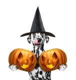Pies w kostiumu z dwa halloweens baniami royalty ilustracja