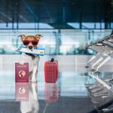 Pies w lotniskowym terminal na wakacje obraz stock