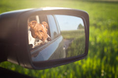 Pies w lustrze Obrazy Royalty Free