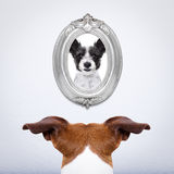 Pies w miłości Obraz Royalty Free