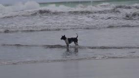 Pies w morzu zbiory wideo