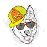 Pies w nakrętce i szkłach również zwrócić corel ilustracji wektora Śliczny husky ilustracja wektor