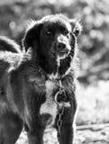 Pies w naturze Zdjęcia Stock