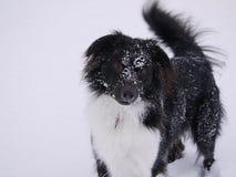 Pies w śniegu Obraz Stock