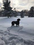 Pies w śniegu Zdjęcie Royalty Free