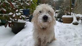 Pies w śniegu pierwszy raz zdjęcia royalty free