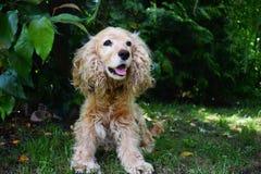 Pies w ogródzie Obrazy Royalty Free