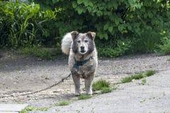 Pies w ogr?dzie ogrodowy strażnik zdjęcia stock