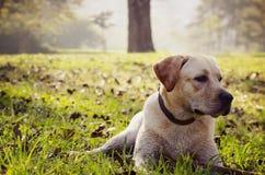 Pies w parku Obrazy Stock