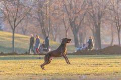 Pies w parku Zdjęcia Royalty Free