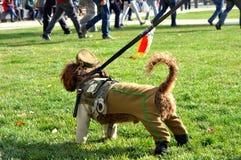 Pies w policja mundurze Obrazy Stock