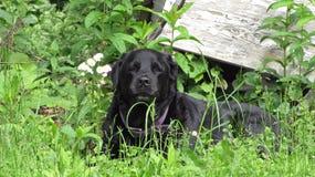Pies w polu Fotografia Stock