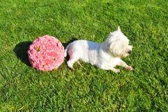 pies w polu Obraz Royalty Free