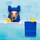 Pies w prysznic obraz royalty free