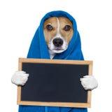 Pies w prysznic lub wellness zdroju obraz royalty free