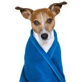 Pies w prysznic lub wellness zdroju zdjęcie royalty free