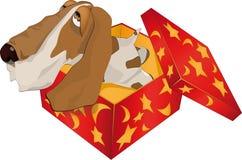 Pies w pudełku Zdjęcia Stock