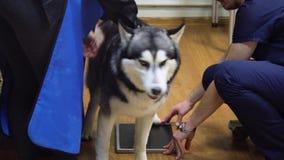 Pies w Radiologicznym pokoju zbiory