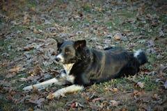 Pies w słońcu Obrazy Royalty Free