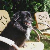 Pies w słońcu obraz royalty free